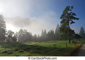 Foggy morning in the alps of Bavaria Germany