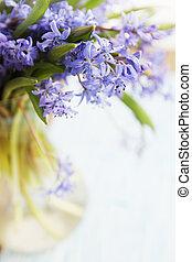blue snowdrop - flower scilla, spring blue snowdrop in vase