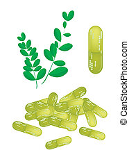 Moringa Leaves with Capsule on White Background
