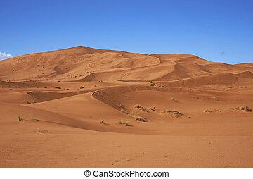 Sand Dunes in the Sahara - Sand dunes in the Sahara Desert...