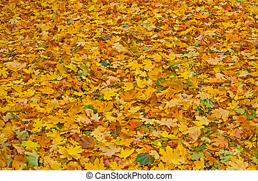 Autumn leaves - Colorful fallen foliage in a city park late...