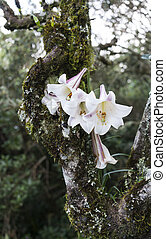 wild lily flower grow in tree nature africa