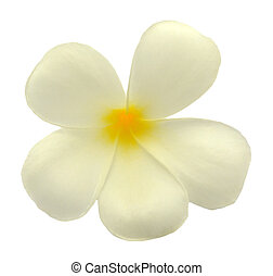 Tropical flowers frangipani (plumeria) isolated on white...