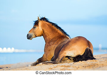 Horse lying near the sea - Horse lying on the sandy beach at...