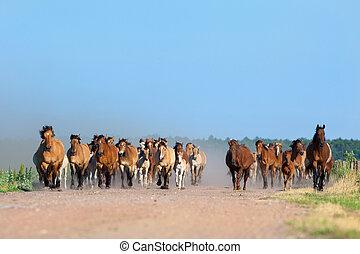 Herd of horses runs outdoor - Herd of horses and foals runs...
