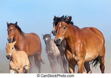 manada, caballos, Corre, azul, cielo