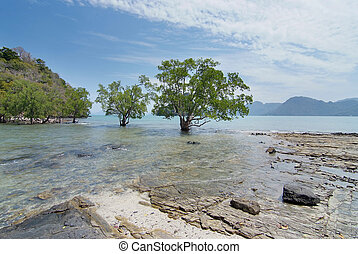 beautiful scenery with trees and islands