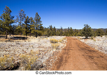 El Malpais National Monument - A muddy dirt pathway through...