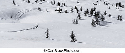 Pralongia, snow and trees - Dolomites, Italy - Snowy...