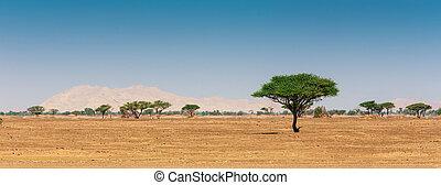 Arabian desert - The Arabian desert on a hot sunny day