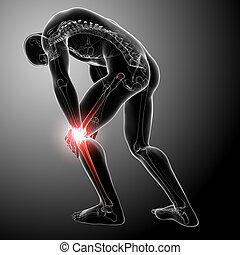 macho, rodilla, dolor, anatomía, gris