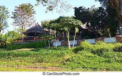 arbor in tropical garden