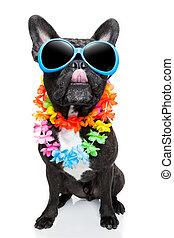 holiday summer dog