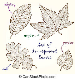 Collection of leaves: cherry, oak, maple, poplar. - Set of...