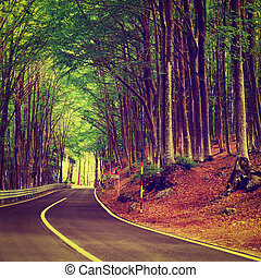 Forest Road - Aspalt Forest Road in Italy, Instagram Effect