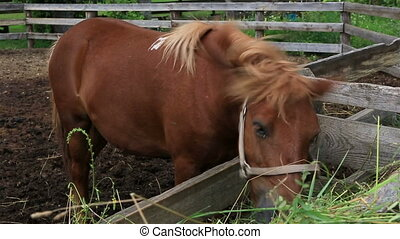 Horse eating fresh hay from the manger.
