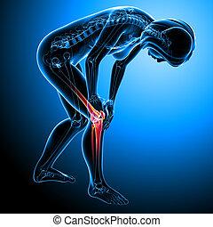 Female knee pain anatomy on blue - 3d rendered Illustration...