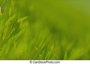 Green grass in artistic composition closeup photo