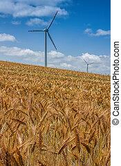 Golden careal field - Landscape of golden weat field in...