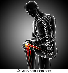Male knee pain anatomy on gray - 3d rendered Illustration of...