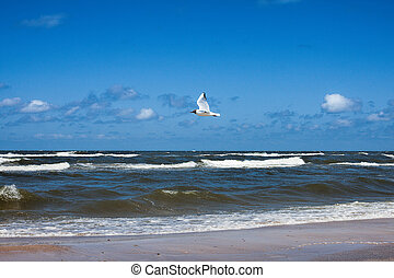 Seagull at coastline - Seagull flying above rough ocean