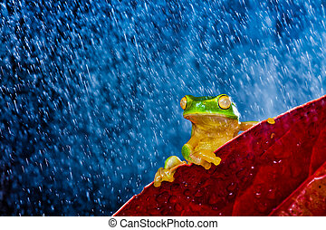 Little green tree frog sitting on red leaf