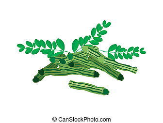 Fresh Moringa Fruit and Leaves on White Background -...