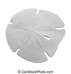 Sand Dollar Sea Shell Isolated On White Background