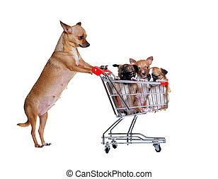 chihuahua mommy with puppies in a shopping trolley