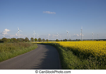 Bright yellow Canola Field with windmills