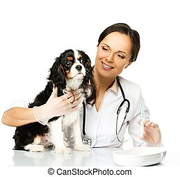 Young brunette veterinary woman with spaniel holding syringe...