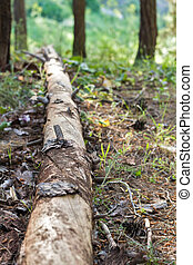 Dead tree, rotten - Photo rotten wood lying on the forest...