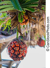 Seashore screwpine fruit - Orange seashore screwpine fruit...