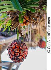 Seashore screwpine fruit - Orange seashore screwpine fruit...