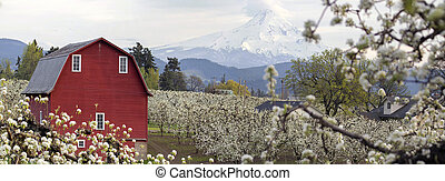 Pear Tree Orchard in Hood River Oregon