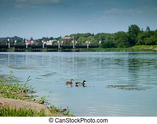Kaczka, Rzeka, Miasto, Donetsk
