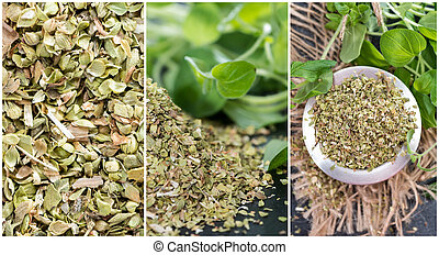 Oregano stylish collage with different close-up shots