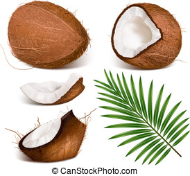 Coconuts with leaves Vector illustration