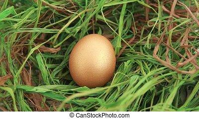 Golden Easter egg on grass - Row of Easter egg on grass