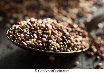 crudo, orgánico, colorido,  Quinoa