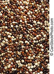 orgánico, colorido, crudo, Quinoa