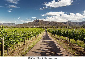 Hunter Valley vineyards - View of Hunter Valley vineyards,...