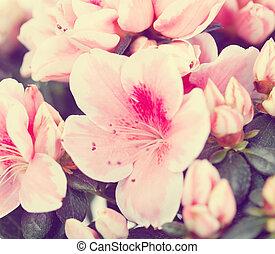 flores, azaléia, grau, Mevrouw, Gerard, Kint