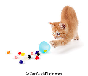 Cute Orange Kitten spilling colorful jellybeans out of a...