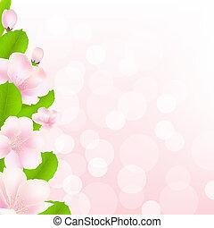 maçã, árvore, flores, com, Bokeh,