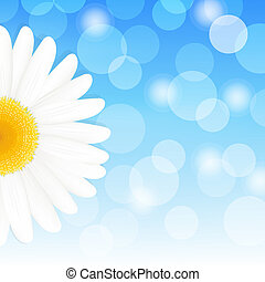 Daisy And Sky - Flower Daisy And Blue Sky, Vector...