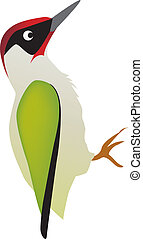 woodpecker - illustration of a woodpecker bird on a white...