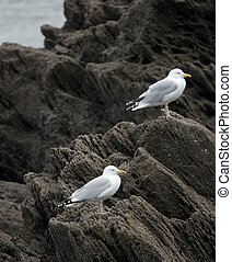 Seagulls standing on cliffs