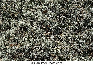 Lichen background