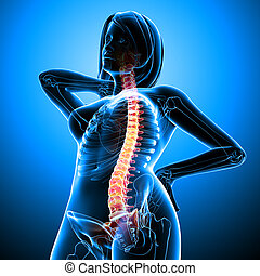 Anatomy of female back pain - 3d rendered illustration of...